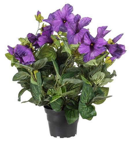 Petunia mørk lilla